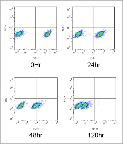 CYTO-ID® Green long-term cell tracer kit Flow Cytometry