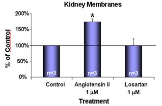 Angiotensin II receptor AT1 polyclonal antibody Membrane ELISA