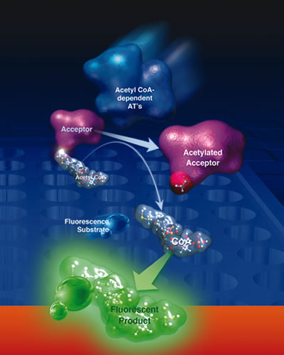 Acetyltransferase activity kit image