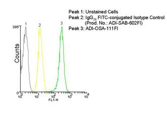 HO-1 monoclonal antibody (HO-1-2) (FITC conjugate) Flow Cytometry