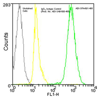 Calreticulin monoclonal antibody (FMC 75) (DyLight™ 488 conjugate) Flow Cytometry