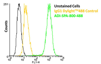 HSP27 monoclonal antibody (G3.1) (DyLight™ 488 conjugate) Flow Cytometry