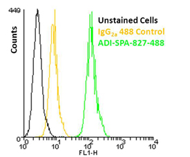 KDEL monoclonal antibody (10C3) (DyLight™ 488 conjugate) Flow Cytometry