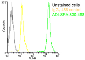 HSP90 monoclonal antibody (AC88) (DyLight™ 488 conjugate) Flow Cytometry