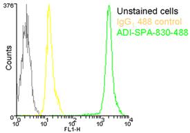HSP90 monoclonal antibody (AC88) (DyLight™ 488 conjugate) Flow Cytometry
