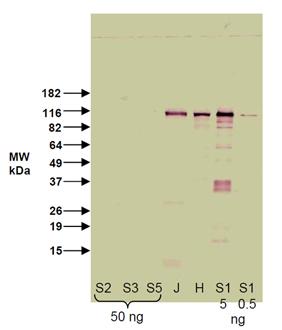 BML-SA427 WB