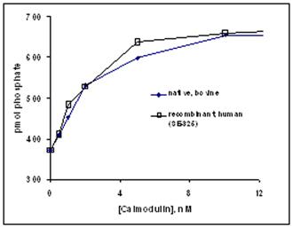 Calmodulin (human), (recombinant) activation