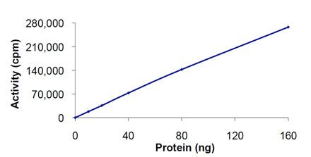 Akt1 (human), (recombinant) (GST-tag) AA