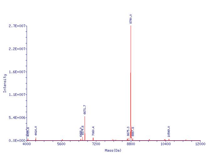 Ubiquitin (bovine), (native) (methylated) Mass Spectrum Analysis