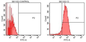 TCP-1α monoclonal antibody (91a) Flow Cytometry