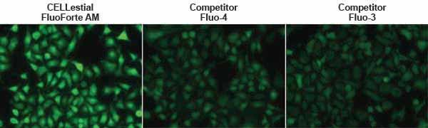 FLUOFORTE® Calcium assay kit  17_Fig1_webimage_01