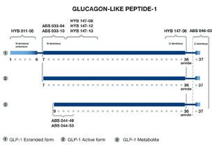 GLP-1 (7-37, 7-36, amide, free NT) monoclonal antibody (10) (biotin conjugate) image