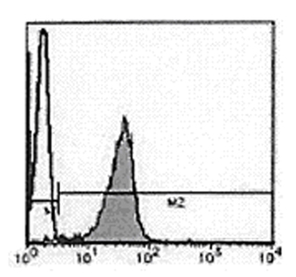 DNA-topoisomerase II α monoclonal antibody (1C5) Flow Cytometry