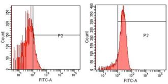 Erk1/2 polyclonal antibody Flow Cytometry