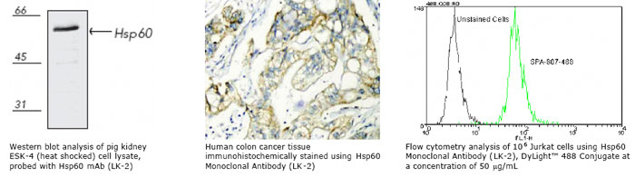 HSP60 monoclonal antibody (LK-2) WB IHC FC