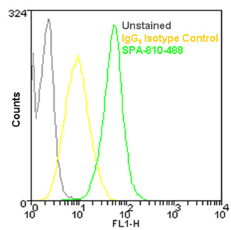 HSP70/HSP72 monoclonal antibody (C92F3A-5) (DyLight™ 488 conjugate) Flow Cytometry