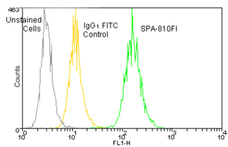 HSP70/HSP72 monoclonal antibody (C92F3A-5) (FITC conjugate) Flow Cytometry