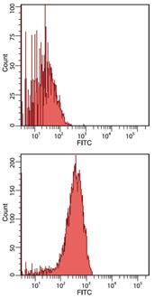HSC70/HSP70 monoclonal antibody (N27F3-4) Flow Cytometry