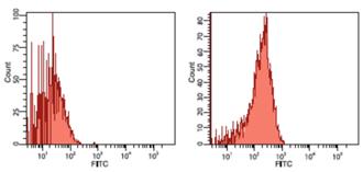 HSP90β monoclonal antibody (K3701) Flow Cytometry