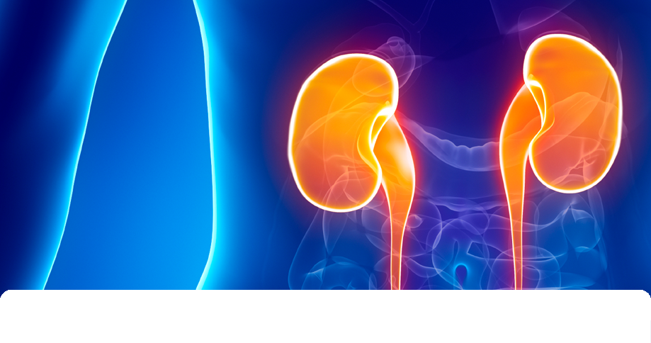 Kidney: Toxicological Assessment