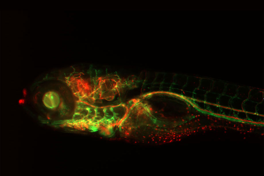 10 Tips for High Quality Images by Cellular Microscopy