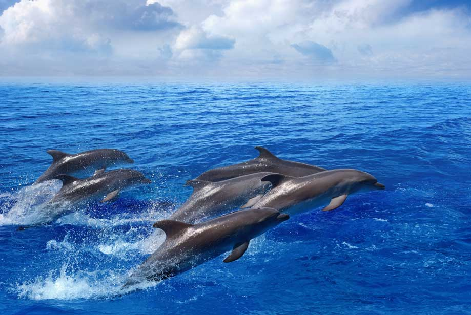 dolphin protective proteins against hypoxia enzo life sciences