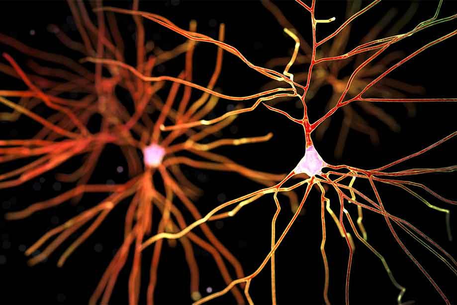 Dopamine được tạo ra qua 2 quá trình