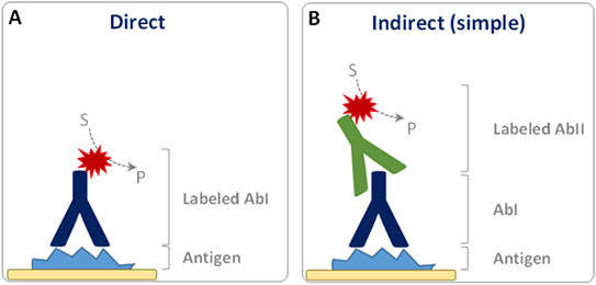direct and indirect IHC detection