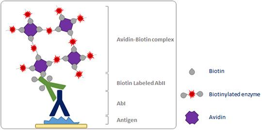 ABC detection method for IHC