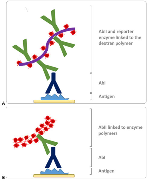 polymer-based detection methods for IHC