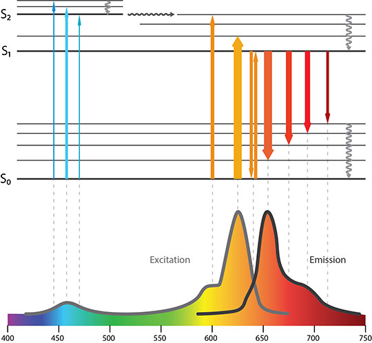 Fluorescence Spectra