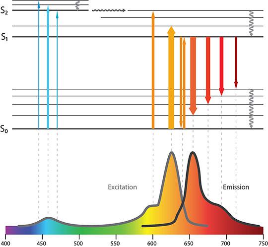 Fluorescence Spectra