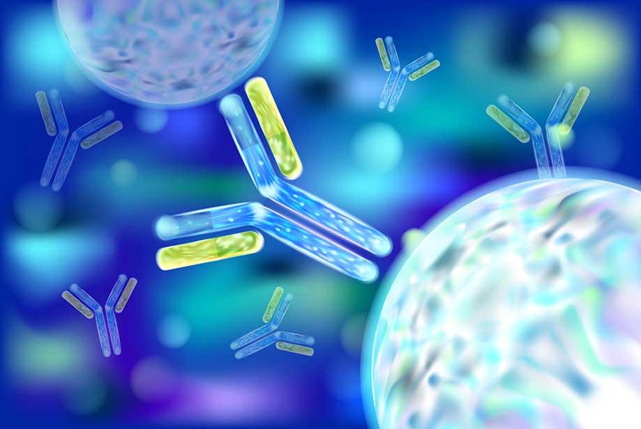 Top 10 Tips for Choosing an Antibody - Enzo Life Sciences