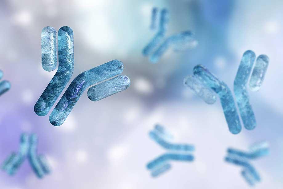 What are Recombinant Antibodies? - Enzo Life Sciences