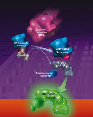 Methyltransferase activity kit