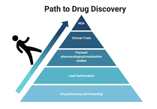 The Path to Drug Discovery