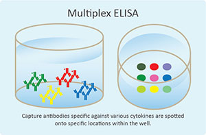 Spotted Multiplex ELISA