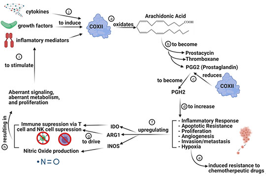 cancer cell metabolic pathway