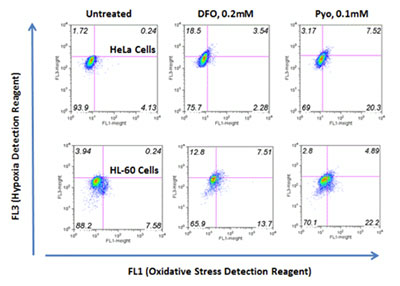Detection of hypoxia and oxidative stress levels